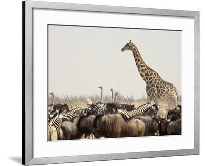 A Lone Giraffe Stands Tall at a Waterhole, Etosha National Park, Namibia, Africa-Wendy Kaveney-Framed Photographic Print