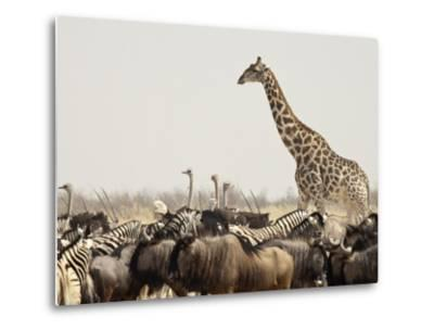 A Lone Giraffe Stands Tall at a Waterhole, Etosha National Park, Namibia, Africa-Wendy Kaveney-Metal Print