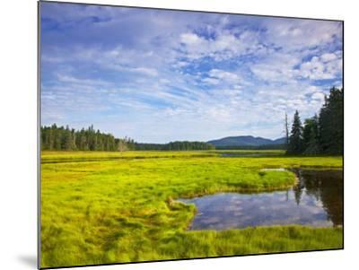 Bass Harbor Marsh in Acadia National Park, Maine, USA-Chuck Haney-Mounted Photographic Print