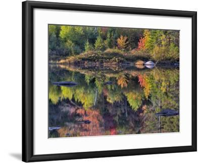 Shoreline Reflection, Lily Pond, White Mountain National Forest, New Hampshire, USA-Adam Jones-Framed Photographic Print