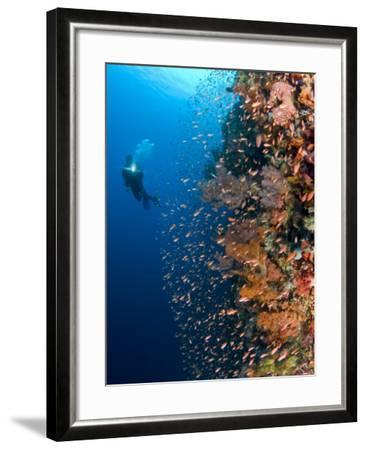 Diver With Light Next To Vertical Reef Formation, Pantar Island, Indonesia-Jones-Shimlock-Framed Photographic Print