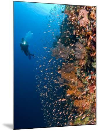 Diver With Light Next To Vertical Reef Formation, Pantar Island, Indonesia-Jones-Shimlock-Mounted Photographic Print