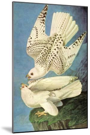 Falcons-John James Audubon-Mounted Art Print
