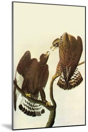 Roughlegged Hawk-John James Audubon-Mounted Art Print