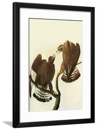 Roughlegged Hawk-John James Audubon-Framed Art Print