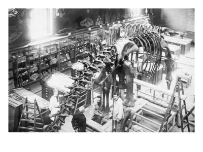 Diplodocus Dinosaur Being Assembled In Paris Museum--Framed Art Print