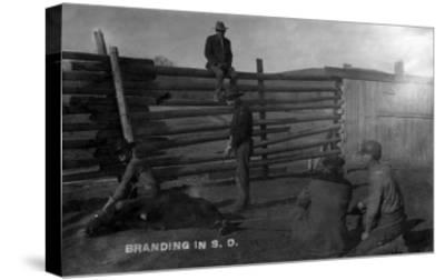 South Dakota - Branding Cattle Scene-Lantern Press-Stretched Canvas Print