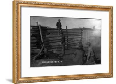 South Dakota - Branding Cattle Scene-Lantern Press-Framed Art Print