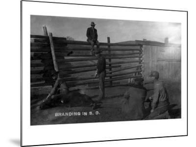 South Dakota - Branding Cattle Scene-Lantern Press-Mounted Art Print