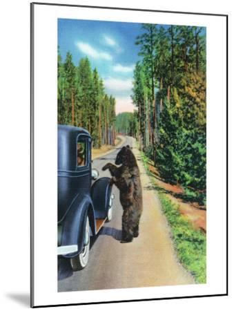 Yellowstone Nat'l Park, Wyoming - Bear Begging by a Car-Lantern Press-Mounted Art Print