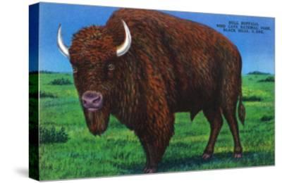 Wind Cave Nat'l Park, South Dakota - Bull Buffalo in Black Hills-Lantern Press-Stretched Canvas Print