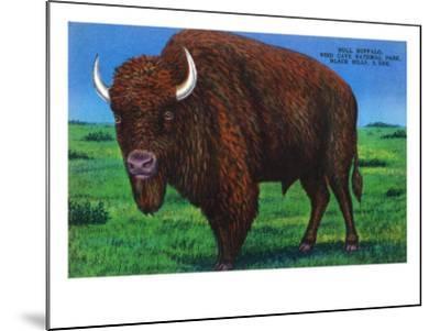 Wind Cave Nat'l Park, South Dakota - Bull Buffalo in Black Hills-Lantern Press-Mounted Art Print