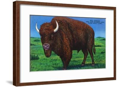 Wind Cave Nat'l Park, South Dakota - Bull Buffalo in Black Hills-Lantern Press-Framed Art Print