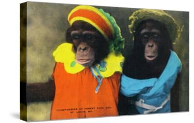 St. Louis, Missouri - Forest Park Zoo Chimpanzees in Costume-Lantern Press-Stretched Canvas Print
