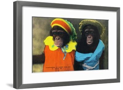 St. Louis, Missouri - Forest Park Zoo Chimpanzees in Costume-Lantern Press-Framed Art Print