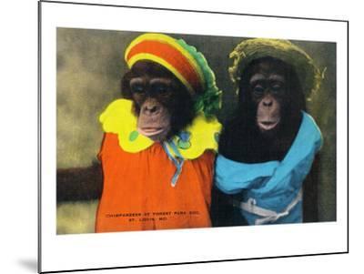 St. Louis, Missouri - Forest Park Zoo Chimpanzees in Costume-Lantern Press-Mounted Art Print