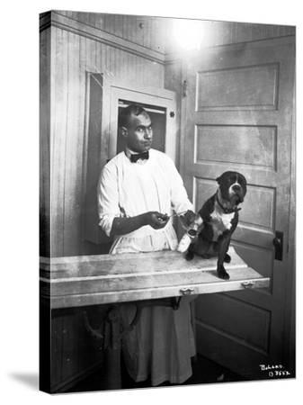 Veterinary Care of Dog, 1921-Marvin Boland-Stretched Canvas Print