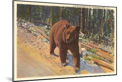 Bear in the Adirondack, New York--Mounted Art Print
