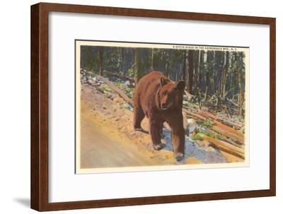 Bear in the Adirondack, New York--Framed Art Print