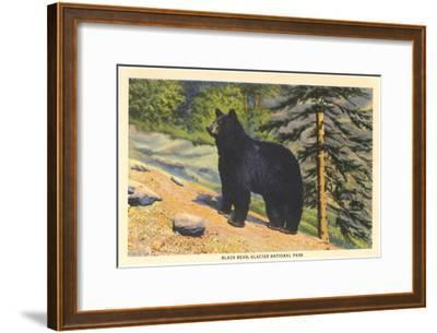 Black Bear, Glacier Park, Montana--Framed Art Print