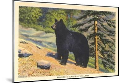 Black Bear, Glacier Park, Montana--Mounted Art Print