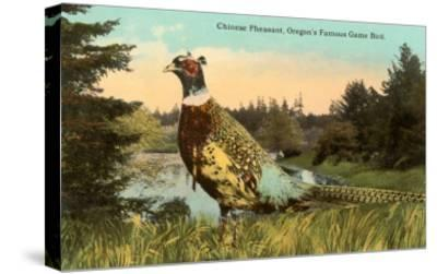 Chinese Pheasant, Oregon Game Bird--Stretched Canvas Print