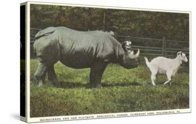 Rhino and Goat, Zoo, Philadelphia, Pennsylvania--Stretched Canvas Print