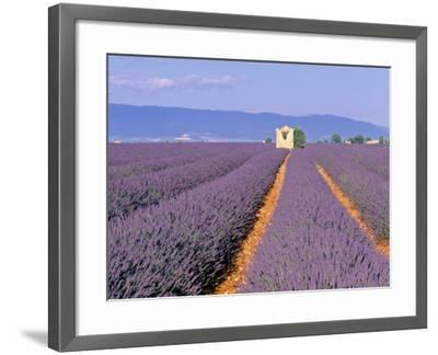 Lavender Fields, Provence, France-Jon Arnold-Framed Photographic Print
