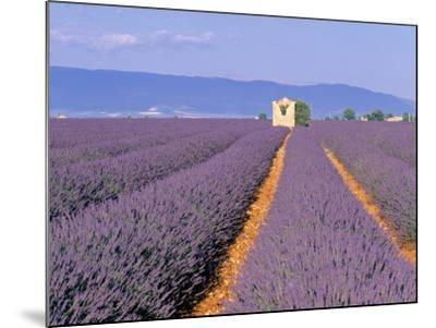 Lavender Fields, Provence, France-Jon Arnold-Mounted Photographic Print