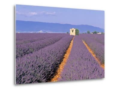 Lavender Fields, Provence, France-Jon Arnold-Metal Print