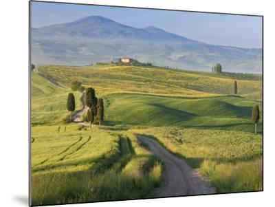 Track, San Quirico D'Orcia, Val D'Orcia, Tuscany, Italy-Peter Adams-Mounted Photographic Print