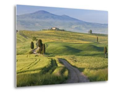 Track, San Quirico D'Orcia, Val D'Orcia, Tuscany, Italy-Peter Adams-Metal Print