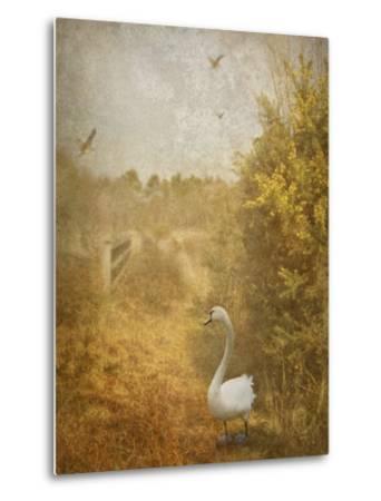 Buzzbird-Lynne Davies-Metal Print