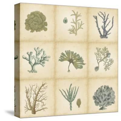 Coral Curio-Vision Studio-Stretched Canvas Print