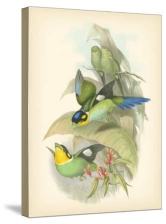 Gould Birds of the Tropics I-John Gould-Stretched Canvas Print