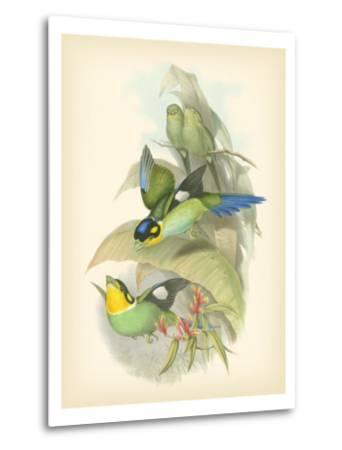 Gould Birds of the Tropics I-John Gould-Metal Print