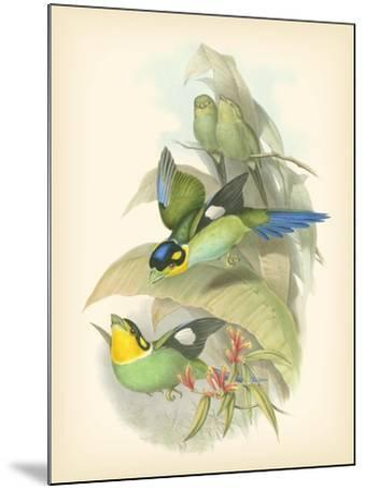 Gould Birds of the Tropics I-John Gould-Mounted Art Print