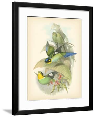 Gould Birds of the Tropics I-John Gould-Framed Art Print