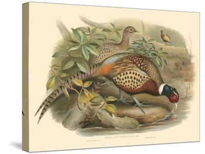 Gould Pheasants I-John Gould-Stretched Canvas Print