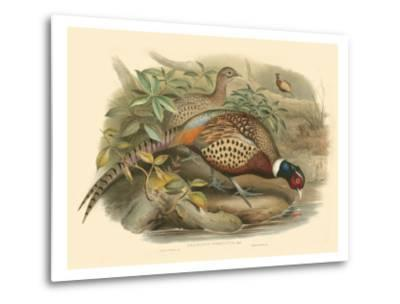 Gould Pheasants I-John Gould-Metal Print