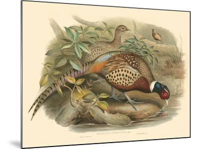 Gould Pheasants I-John Gould-Mounted Art Print