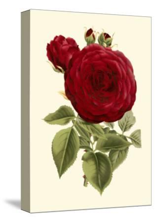 Magnificent Rose I-Ludwig Van Houtte-Stretched Canvas Print