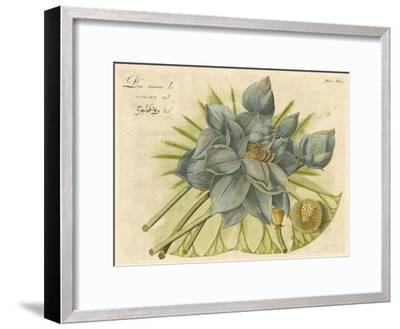 Blue Lotus Flower II--Framed Art Print