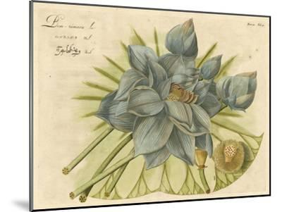 Blue Lotus Flower II--Mounted Art Print