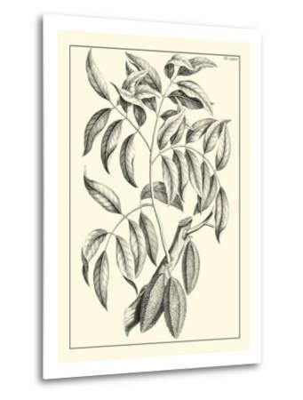 Non-Embellished Antique Foliage III--Metal Print