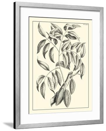 Non-Embellished Antique Foliage III--Framed Art Print