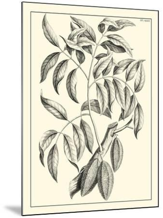Non-Embellished Antique Foliage III--Mounted Art Print