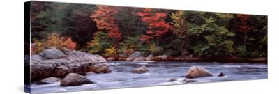 Trees Along a River, Moose River, Adirondack Mountains, New York State, USA--Stretched Canvas Print