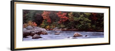 Trees Along a River, Moose River, Adirondack Mountains, New York State, USA--Framed Photographic Print