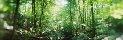 Trees in a Forest, Hudson Valley, New Jersey, USA--Framed Photographic Print